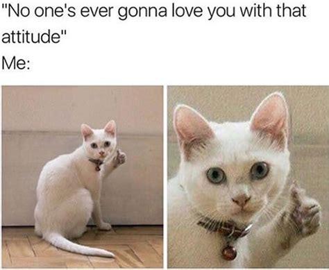 i up meme cat memes thumbs up loldamn