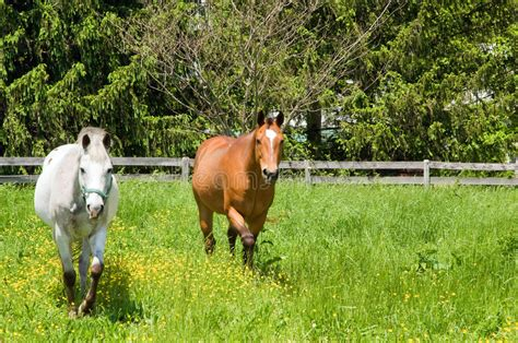 bright pasture susan cole photography two horses in pasture royalty free stock photo image