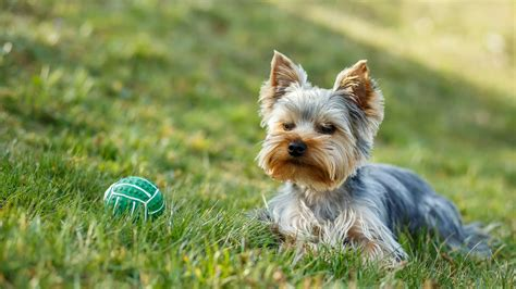 dog proof grass backyard dog eating the grass 6 ways to pet proof your lawn and garden today com