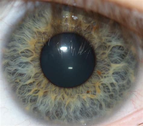 eye pattern meaning iris recognition wikipedia