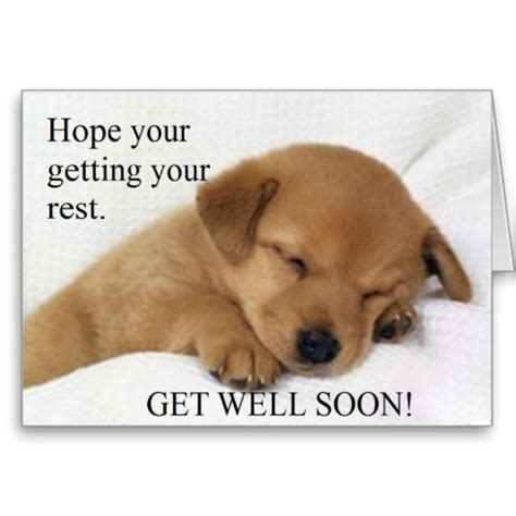 get well soon puppy 17 best images about get well soon on get well greeting card and get well