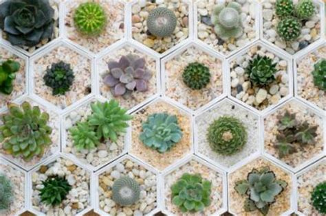 are succulents poisonous to dogs are succulents poisonous to dogs lovetoknow