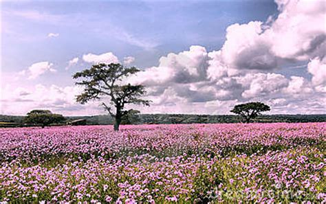 Landscape Pictures With Flowers Flowers Landscape Stock Photo Image 3801740