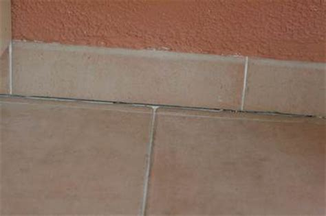 Bugs In Bathroom Grout How To Get Rid Of Ants