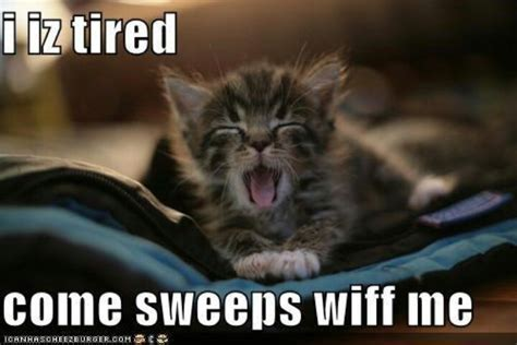 Tired Memes - tired cat memes image memes at relatably com
