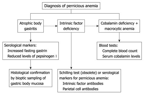 diagnosing anemia flowchart anemia workup flowchart create a flowchart