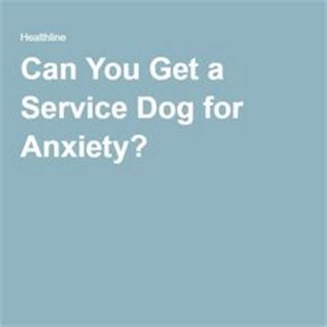 how to a service for anxiety 19 reasons to get a service for your anxiety anxiety guru
