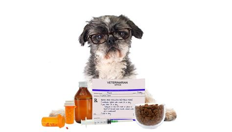 best probiotic for dogs what are the best probiotics for dogs and do our pets need them