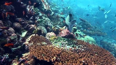 komodo island diving trip youtube