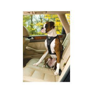 seat belt petsmart padded harness car seat get free image about wiring