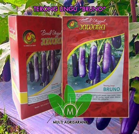 Benih Terong Jawara jual benih terong ungu quot bruno quot harga murah bogor oleh