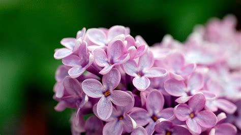 Light Purple Flowers 1080p Wallpapers Hd Wallpapers Id Light Flowers