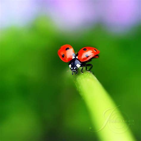Ladybug World The Ladybug World On Behance