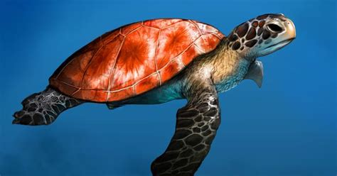 google images turtle sea turtle google search turtles for tabby pinterest