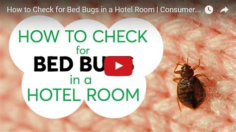 how to check for bed bugs how to check hotel for bed bugs you should always check