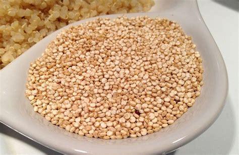 come si cucina la quinoa come cucinare la quinoa cure naturali it