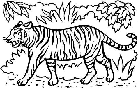 tiger coloring page template white tiger coloring pages