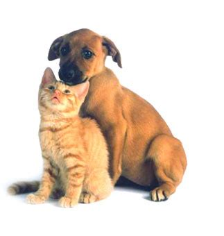 fish oil can help keep your dogs and cats healthy