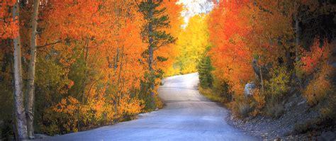 california fall color california fall color 187 bishop creek