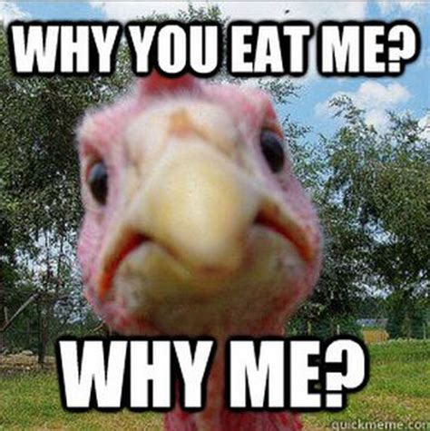 Turkey Memes - the funniest memes for thanksgiving 2012