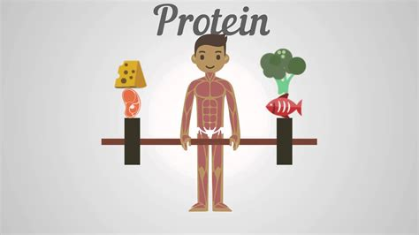 protein v carbs biology proteins carbohydrates fats