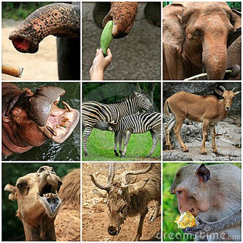 collage  animals   zoo royalty  stock photo