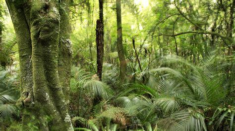 amazon nz rainforest facts plants nature eden channel