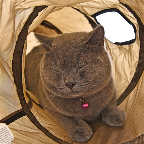 Cat Tunnel by Pet Cat Tunnel Pop Up Type S Collapsible Kitten