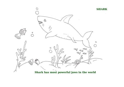 ocean border coloring page free coloring pages of ocean border