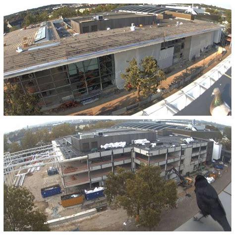 messe essen news aufmerksame beobachter auf dem dach - Was Heißt Dach Auf Englisch
