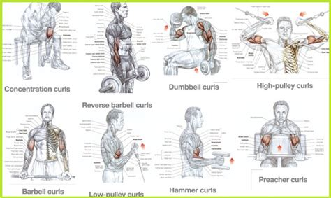 best bicep workouts for mass building all bodybuilding