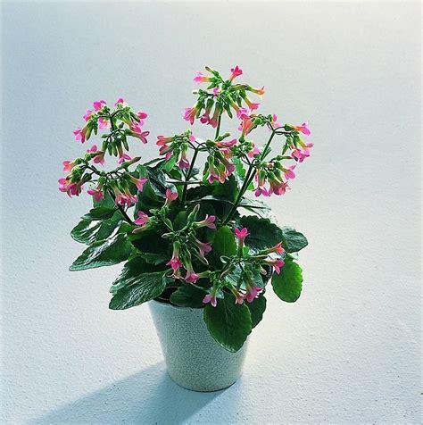 fiori d appartamento piante e fiori d appartamento idee per interni e mobili
