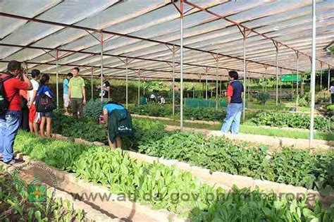 Garden Of Organic Farm Organic Agriculture Practices In The Cordilleras Forums