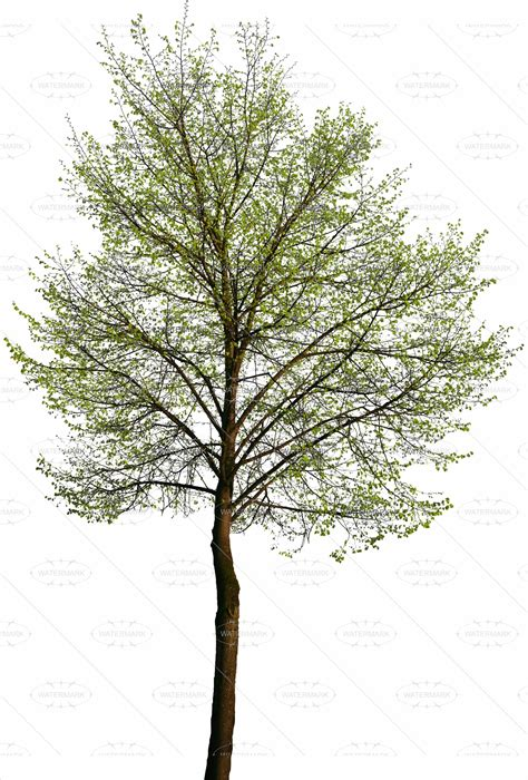 templates tree photoshop best photos of tree cut out christmas tree cut out cut