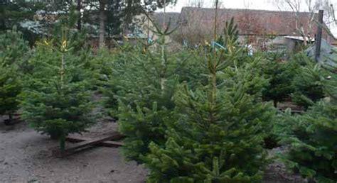 best 28 welcher weihnachtsbaum riecht am besten