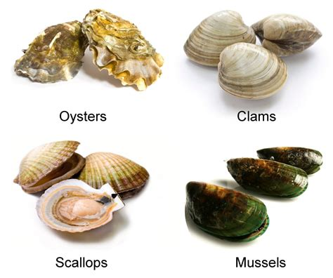 Why Are Clams Referred To As Filter Feeders what do mollusks eat it s not what you expected
