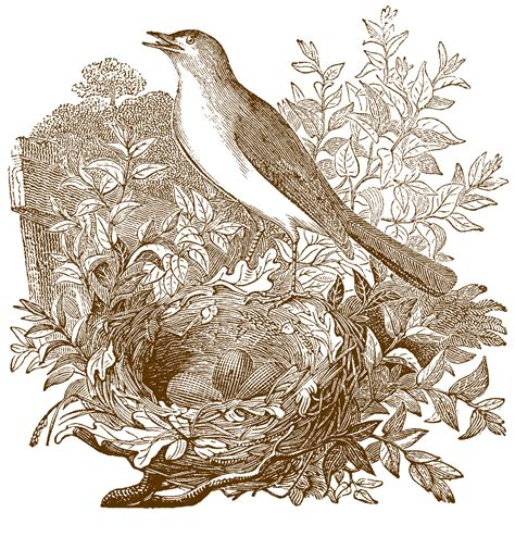 free vintage nightingale images the graphics