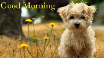 amazon black friday 2017 kindle latest hindi good morning photo s images pictures