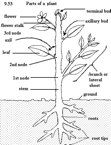plant diagram labeled parts of a flowering plant diagram for