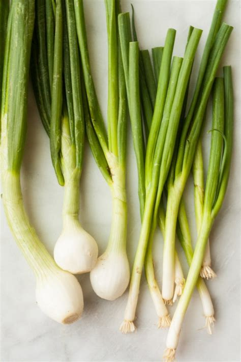 difference between scallions and green spring onions