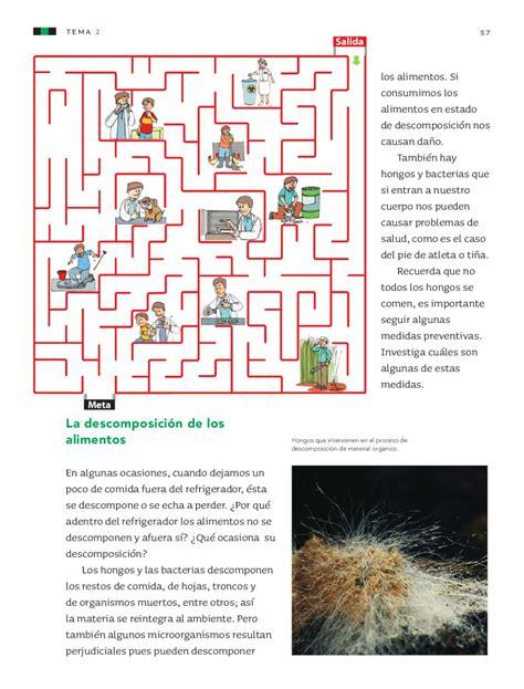 cadena alimenticia hongos y bacterias ciencias naturales 4to grado by rar 225 muri issuu