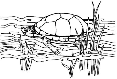 pond turtle coloring page pond turtle coloring pages