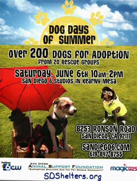 adoption events san diego kearny mesa adoption event days of summer second