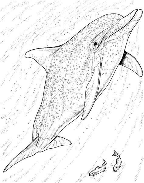coloring page of bottlenose dolphin bottlenose dolphin coloring pages free dolphin coloring