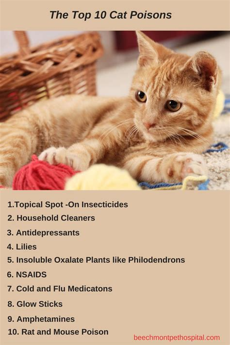 aleve side effects bleeding gums 15 best common household toxins for pets images on