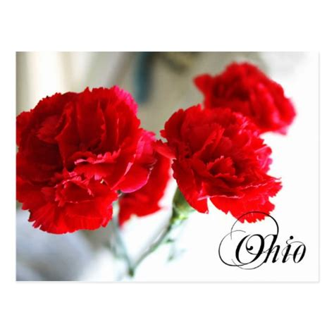 ohio oh state flower list of 50 state floweres of the ohio state flower carnation postcard zazzle