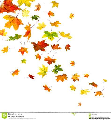 clipart autumn leaves autumn leaves falling clipart wallpapers gallery
