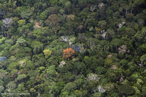 canopy amazon amazon slideshow amazon rainforest canopy