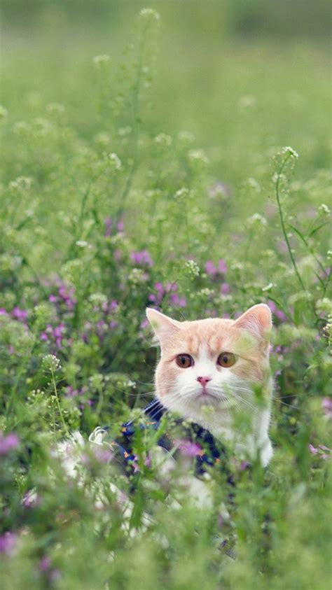 kitten wallpaper for iphone 6 cute cat grass iphone 6 wallpaper hd iphone 6 wallpaper