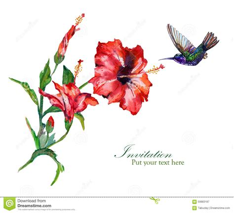 Hibiscus Card Template by Hibiscus Greeting Card Template Stock Illustration Image